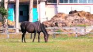 Thoroughbred Horses in Niikappu,Hokkaido,Japan video
