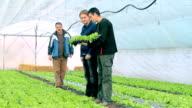 Three Farmers in Greenhouse video