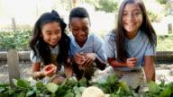 Three friends examine vegetables on a class field trip at a local farm video