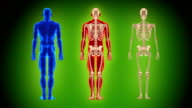 Three full length human body. Loopable. Alpha matte. Green background. video