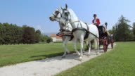 DS Three generation family riding in a horse drawn carriage video