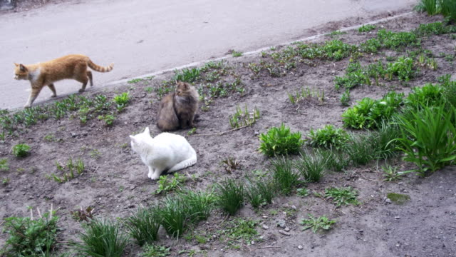 Three Homeless Cats on the Street in the Park video