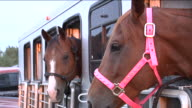Three horses in trailer video