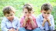 Three little boys eating strawberries video