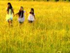 NTSC Three sisters walk in golden grass field video
