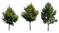 Three Trees on White video
