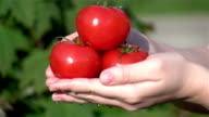 Three videos of hands holding tomatoes in real slow motion video