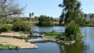 Three videos of oasis in 4K video