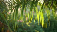 Three videos of palm leaves in 4K video