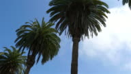 Three videos of palm tree street in 4K video
