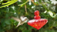Three videos of real humming bird in 4K video
