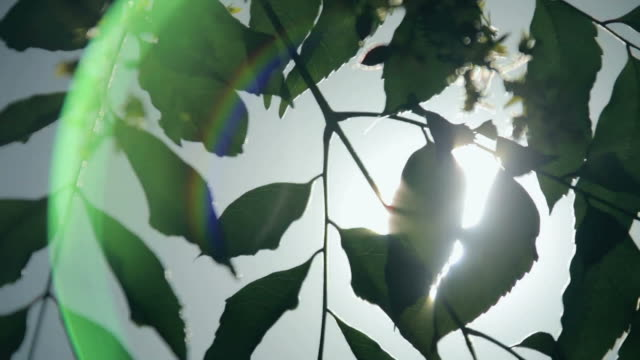 Through the Leaves video