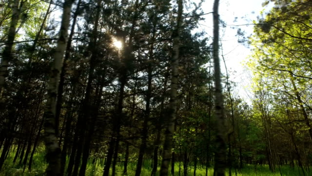 through the spring forest video