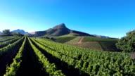 Through the vineyards video