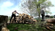 Throwing log on pile of timber low angle wide shot video