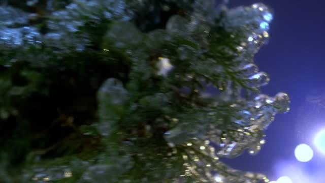 Thuja tree icy, freezing rain video
