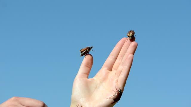 thumb climbs bugs video