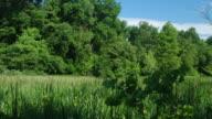 Tidal Marsh video