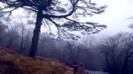 Tiger Pine tree, Mt.huangshan,Anhui,China video