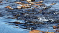 Tight Shot Of American River Flowing Over Rocks video