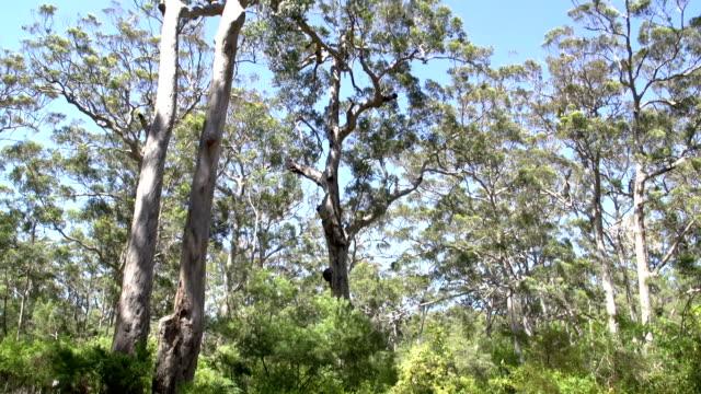 Tilt from margaret river forest, Western Australia video