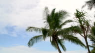 Tilt from Mission Beach with palm tree and dunk island at the background video