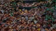 Tilt Up,Autumn forest park  view,Northern Ireland video