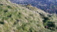 Tilt Up,Belfast bay view from cavehill forest park,Northern Ireland video