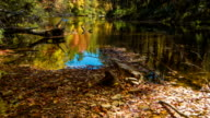 Tilting-up to Vibrant Fall Colors on Linville River, North Carolina video
