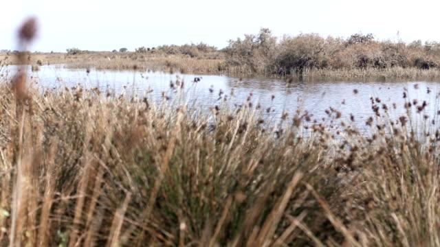 TiltUp: Pond in autumn video