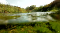 Time lapse aquatic life video