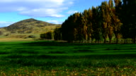 Time lapse, autumn tree in the park and blue sky, arrow town, new zealand, video