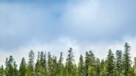 Time Lapse - Beautiful Clouds Moving Over Pine Trees video