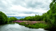Time Lapse - Beautiful Lupines on the River video