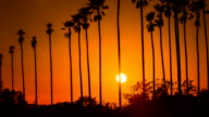 Time Lapse - Beautiful Sunset Through Palm Trees video