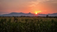 4K Time lapse : Corn field and sunrise in farm agriculture night to day Time lapse. video