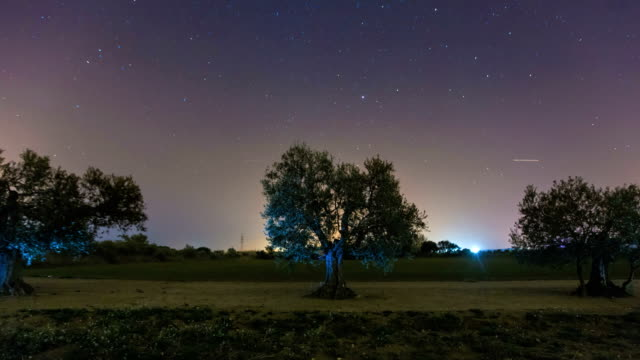 Time lapse in an Olive trees field at night video