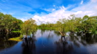 Time lapse landscape with clouds swamp video