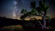 4K Time lapse - Milky Way Tree lake reflection video