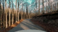 Time lapse of a car trip in the forest video