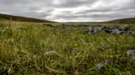 Time lapse of arctic tundra vegetation in a windy day video