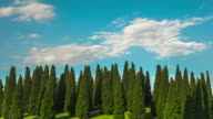 Time Lapse of Beautiful Clouds Moving Over Pine Trees video