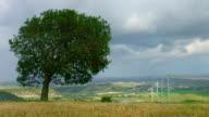 Time lapse of beautiful field, green tree near wind farm, video