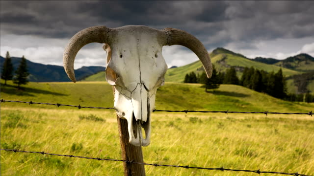 Time lapse of cattle skull and storm clouds western concept video