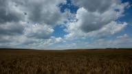 time lapse of field with cumulus clouds video