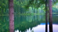 Time lapse of forest reflection in lake video