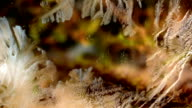 Time lapse of frost forming on a window in fall, filmed with a macro lens in HD. video