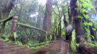 Time lapse of Nature trails Ang Ka Doi Inthanon national park. video