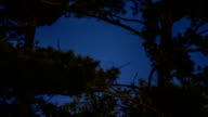 Time Lapse of Planets and Pine Trees video