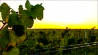 Time lapse of sunrise over vineyard valley video